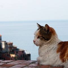 海辺の町に住む人